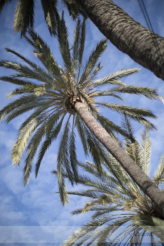 Mallorca, Palma, Travel, Fotograf Ingela Vågsund från Stenungsund, Tjörn, orust, Kungälv, Göteborg, företagsfotografering, porträttfotografering