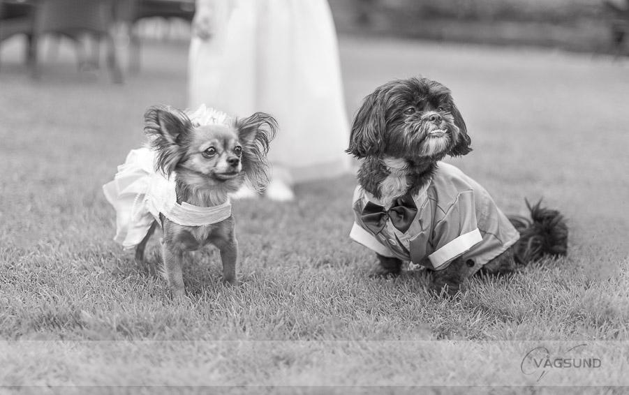 Sötaste hundarna - Thorskogs Slott bröllop, Fotograf Ingela Vågsund från Stenungsund, Tjörn, Kungälv, Göteborg, Barn, Barnfotografering, Bröllopsfotograf